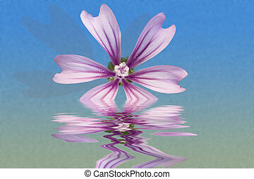 Malva sylvestris - Photo of Malva sylvestris on water and...
