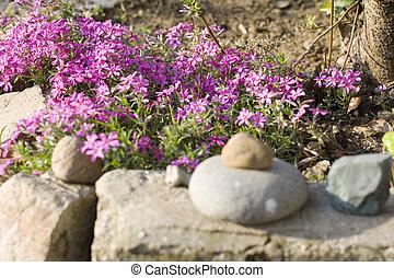 Fuchsia flowers - Bed flower with Fuchsia flowers