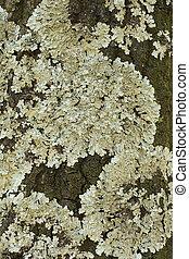 lichen - Photo of lichen oa tree