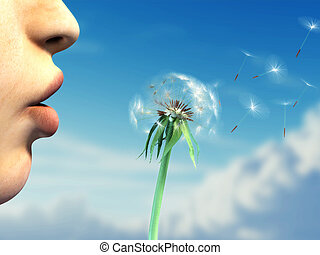 Blowing on a dandelion - Young woman lips are blowing on a...