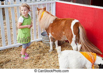 Petting zoo - Playing with animals in petting zoo on a...