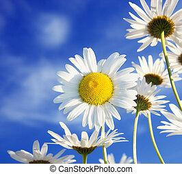 Charm of summer - dandelions on a summer solar  sky
