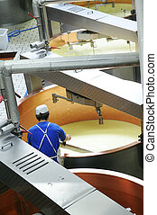 cheese Beaufort manufacturing - Manufacturing of the french...
