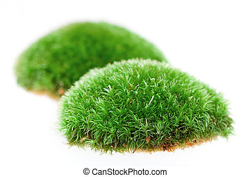 Close up of moss on white background - Detail of moss on...