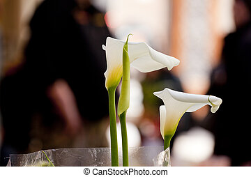White calla - Photo of nice White calla