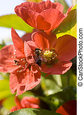 Wasp on red flower in the garden