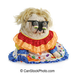 silly dog - english bulldog wearing silly glasses and clown...