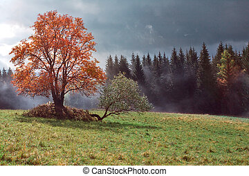 Landscape with a fog - Color tree and landscape with a fog