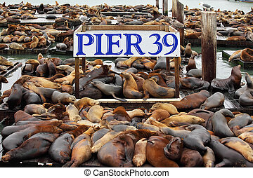 The well-known Pier 39 in San Francisco with sea lions....