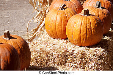 Orange Pumpkins on a bale of hay