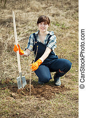 Famale farmer planting sprout - Famale farmer planting...