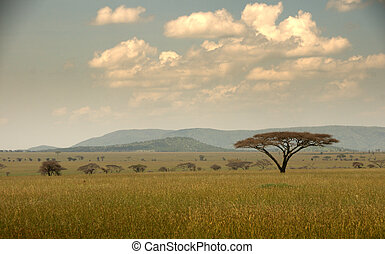 Serengeti Landscape with acacia tree