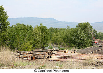 Logging operation in feeld with trees in background