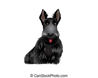 Scottish Terrier - Black Scottish Terrier vector...