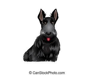 Scottish Terrier - Black Scottish Terrier vector...