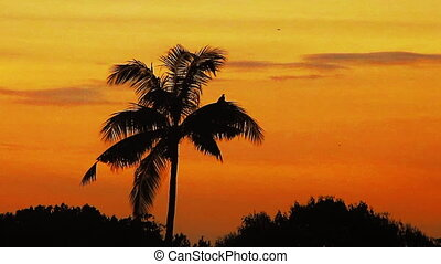 tropical sunrise - colored sunrise in the tropical forest
