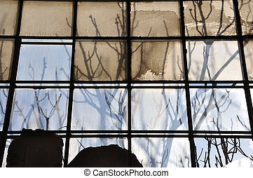 branches and broken glass background - Tree branches and...
