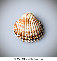 Half of shell closeup from above