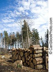 Pile of logs in deforestation area in forest - Deforestation...