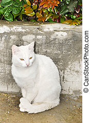 white cat sitting in a park