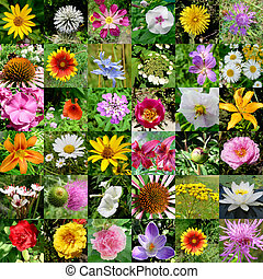 collection of flowers - big collection of different flowers