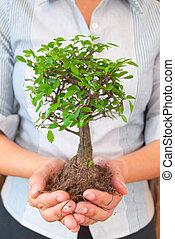 mulher, árvore, negócio, segurando