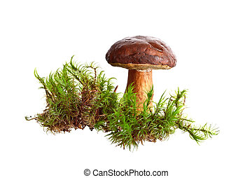 Mushroom isolated on white background