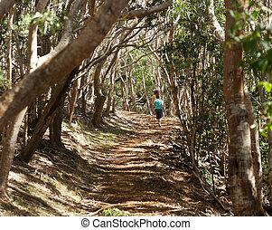 Women hiking through woods in Kauai - Two female walkers on...