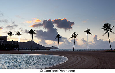 Palm trees at dawn in Waikiki