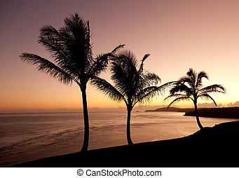 Sunrise in Kauai - Sunrise with palm trees with Kilauea...