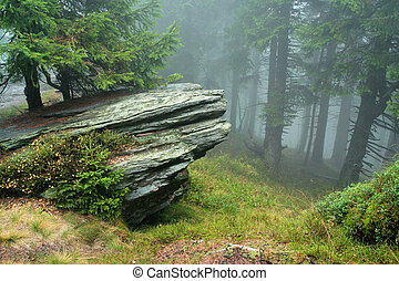 rock in mist of forest