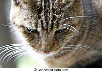 Cat, close-up shot