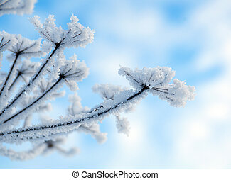 Winter landscapeWinter scene Frozenned flower