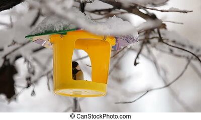 Birdhouse. HD - Birdhouse is hanging on a tree in the wood...