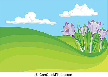 blooming crocus - early spring - the beginning of spring,...