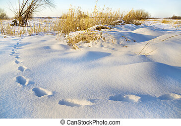 Traces on snow in the field on a decline