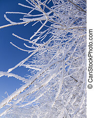 Winter nature. - Tree branches covered with hoarfrost....