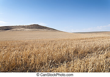 Barley field - Harvested barley field in an agrarian...