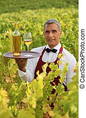 Waiter serving white wine in a vineyard