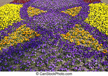 Viola Hybrids in a park in spring, other english names are...