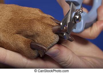 trimming dog nails - close up of dog nail trimming