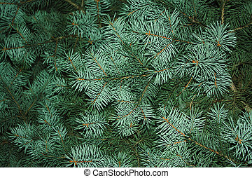 fir tree, background for christmas design