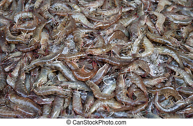 fresh shrimps or prawns - fresh uncooked prawns or shrimps...