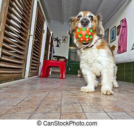 dog has fun playing in the patio