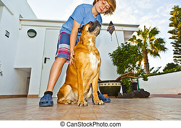 boy playing with his friedn, a boxer dog - boy playing with...