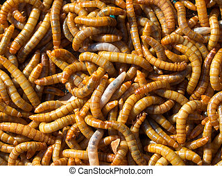 Mealworm abstract background