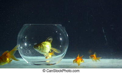 Concept: problems with imagination - Goldfish that can't...