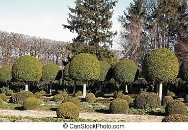 shrubs boxwood, French garden Park of a castle near Paris...