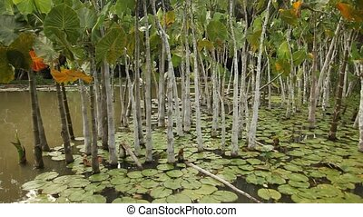 Water Plants in Amazon Area