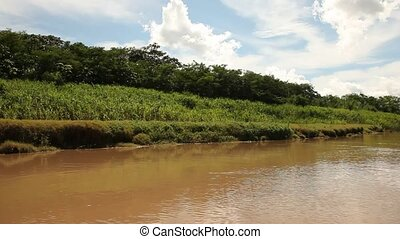 River In Rainforest - Peru, Amazon river.